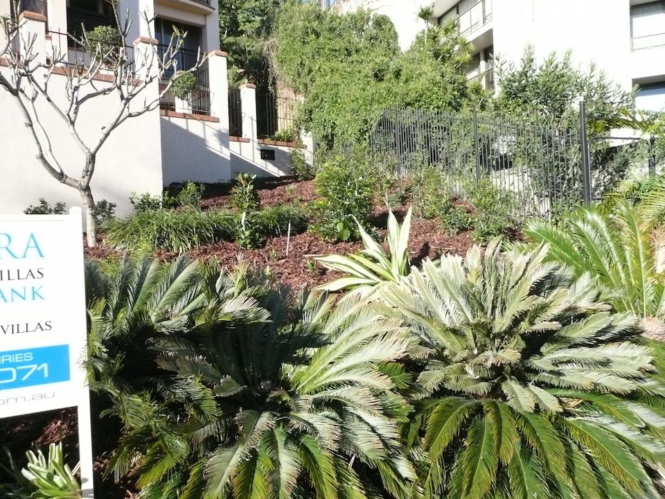 Planting - Kangaroo Point - Hotel garden rejuvenation.