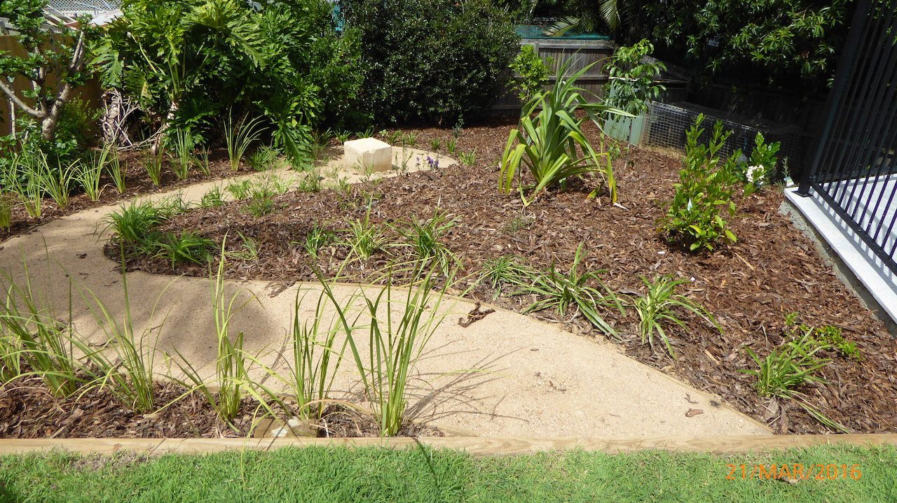 Planting - Manly West - Garden Makeover around new pool
