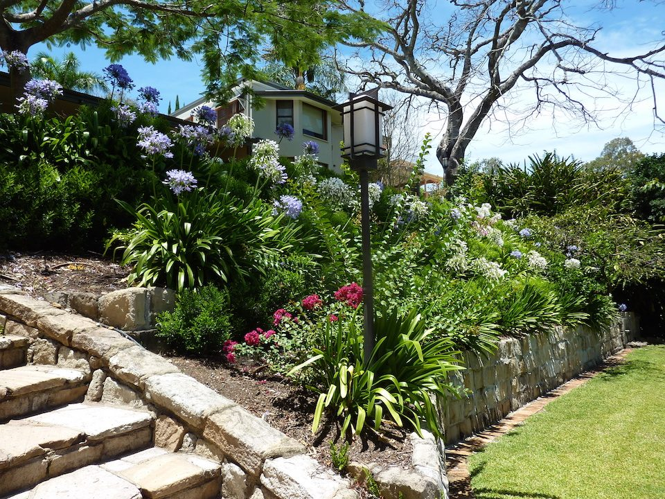 Planting - Indooroopilly - complete Garden rejuvenation.