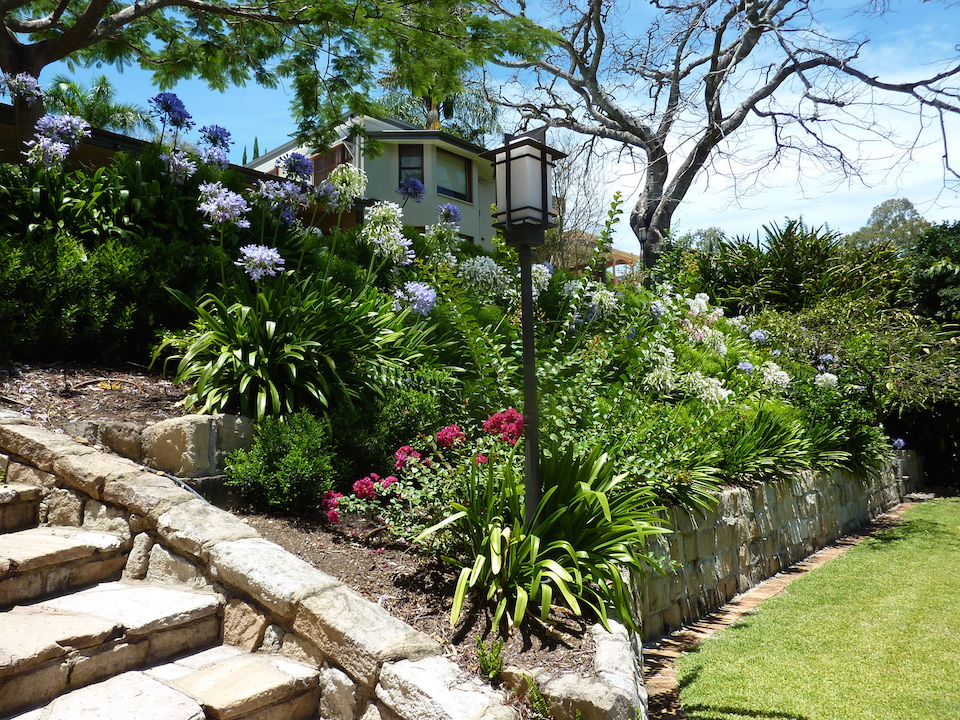 Planting - Indooroopilly tropical escape